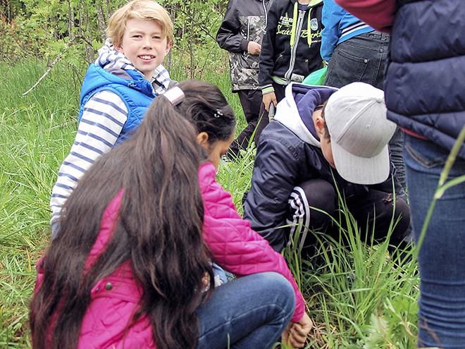 Skolklasser hjälper forskare vid Umeå universitet att gräva ner och upp tepåsar.